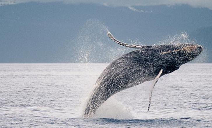 Whale having fun in ocean